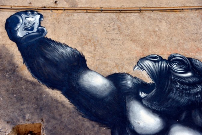Magliana. Il selfie del gorilla